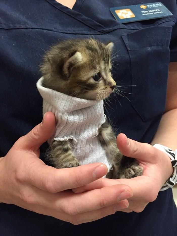 可愛いセーター子猫