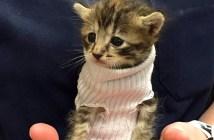 セーター子猫