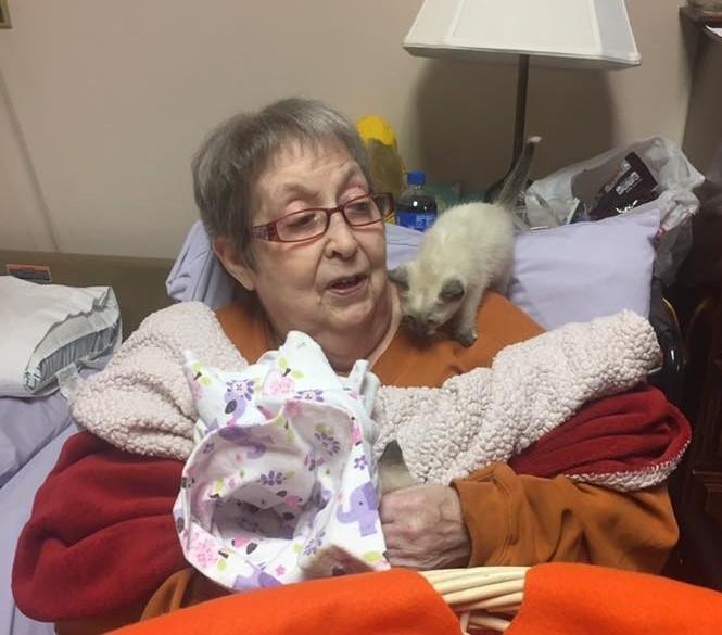 楽しそうなおばあちゃんと子猫