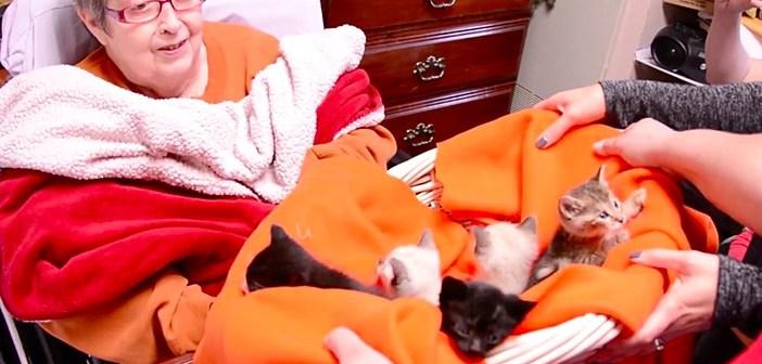 ホスピスの子猫達