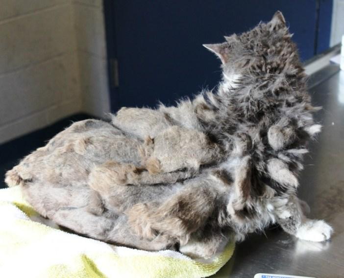 スゴイ毛の猫