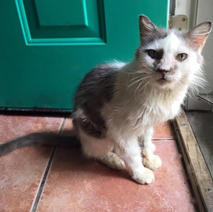 見上げる老猫