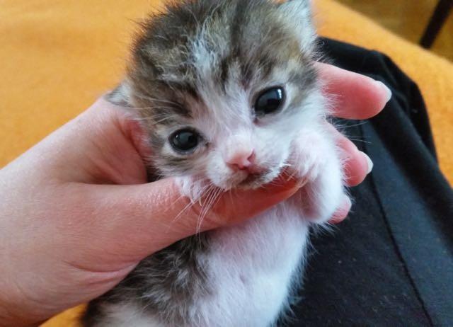 小さい子猫の顔
