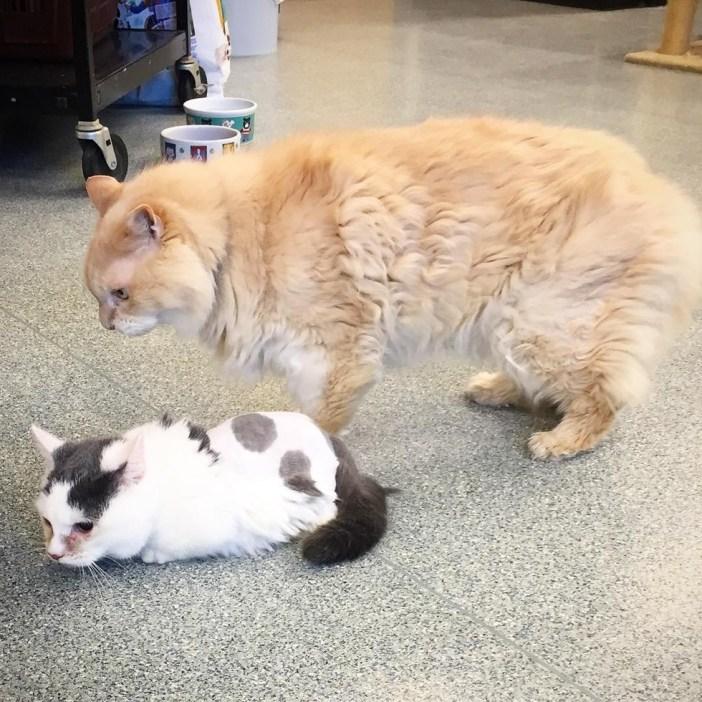 普通の猫と小さな猫