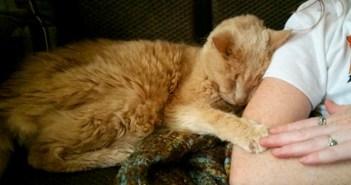 手を繋ぐ猫と人間