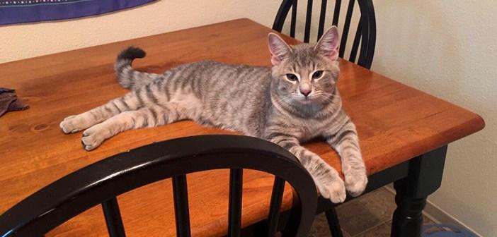 玄関の外から猫の声が聞こえてきた! ドアを開けると1匹の猫がスーッと入ってきて… ( *´艸`) 2枚