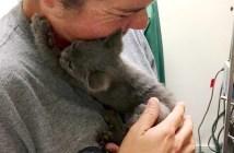 高速道路から助けられた子猫