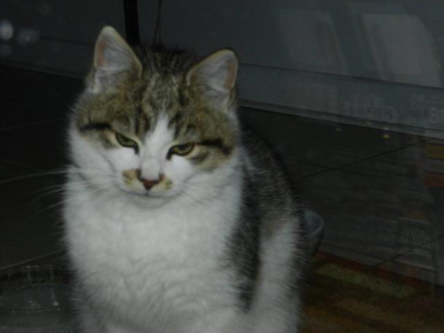 たたずむ猫