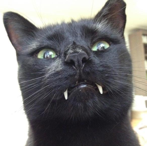 不思議な表情の猫