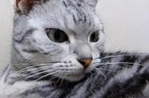 目線を合わせない猫