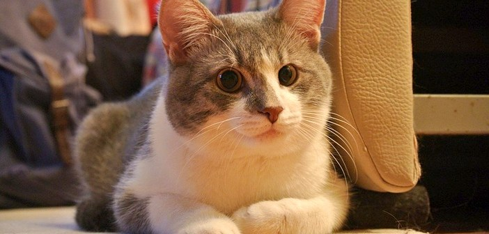 反時計回りの猫