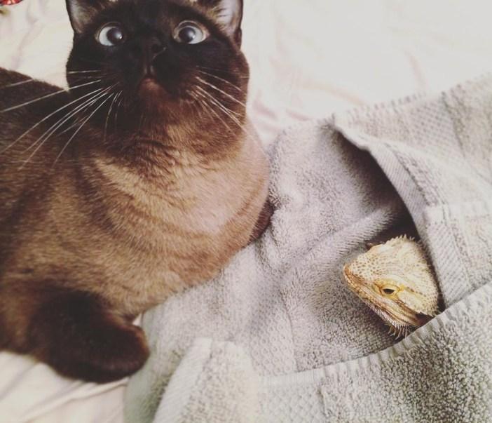トカゲと仲良しな猫
