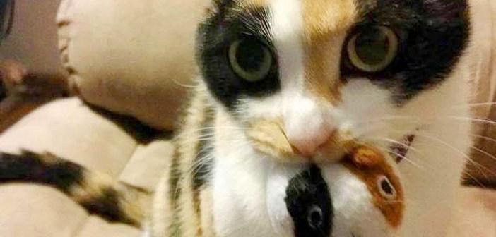 ヌイグルミと猫