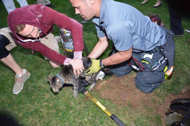 救出された猫