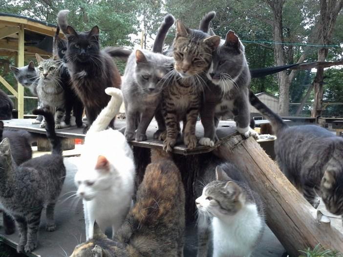 猫がいっぱい