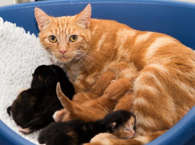 子猫のミルクタイム
