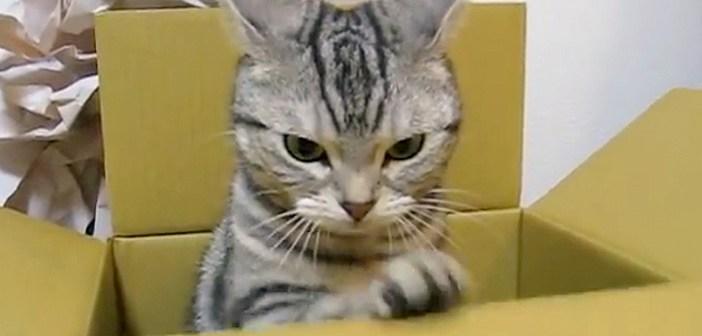 バシバシする猫
