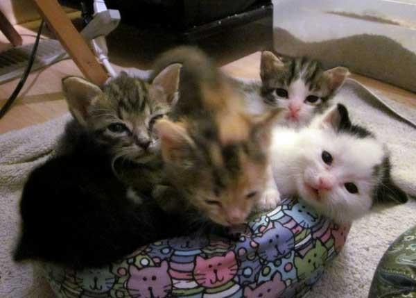いい表情の子猫達