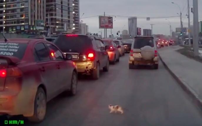 道路に飛び出した子猫