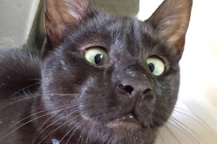 素敵な表情の猫