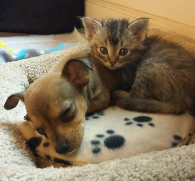 一緒の子猫と子犬