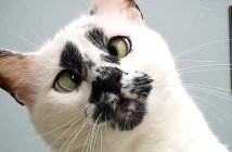 変わった顔の猫