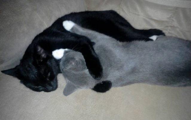 ギュッとして眠る猫