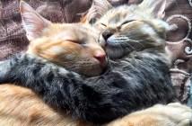 抱きしめ合う猫