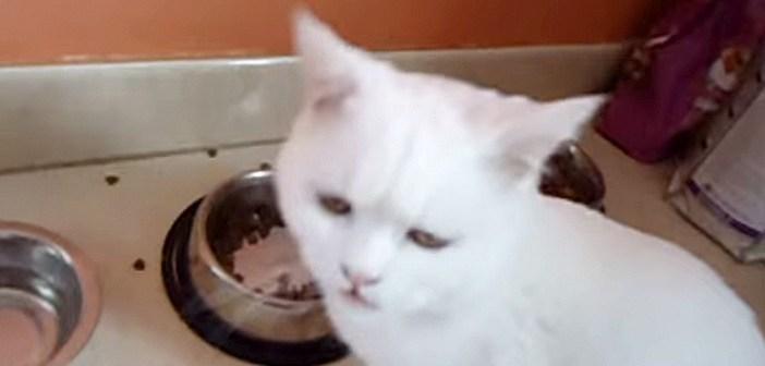 一口ごとにナデナデを要求する猫