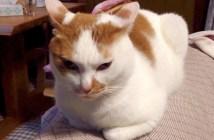 怒り顔の猫さん
