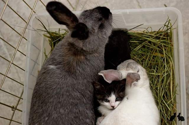ウサギと子猫