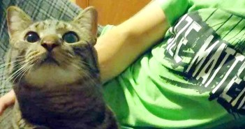 2回保護施設に戻された猫