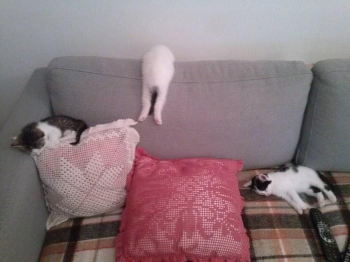可愛い寝相の子猫たち