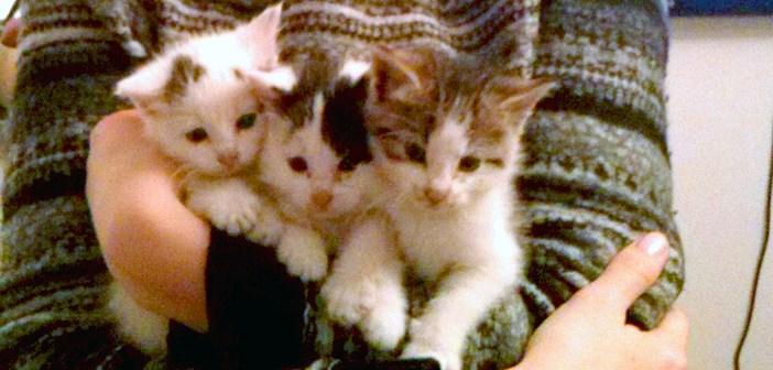 いつの間にか、家の中に侵入していた3匹の子猫。そのまま家族に迎えられると… 幸せいっぱいに! (12枚)