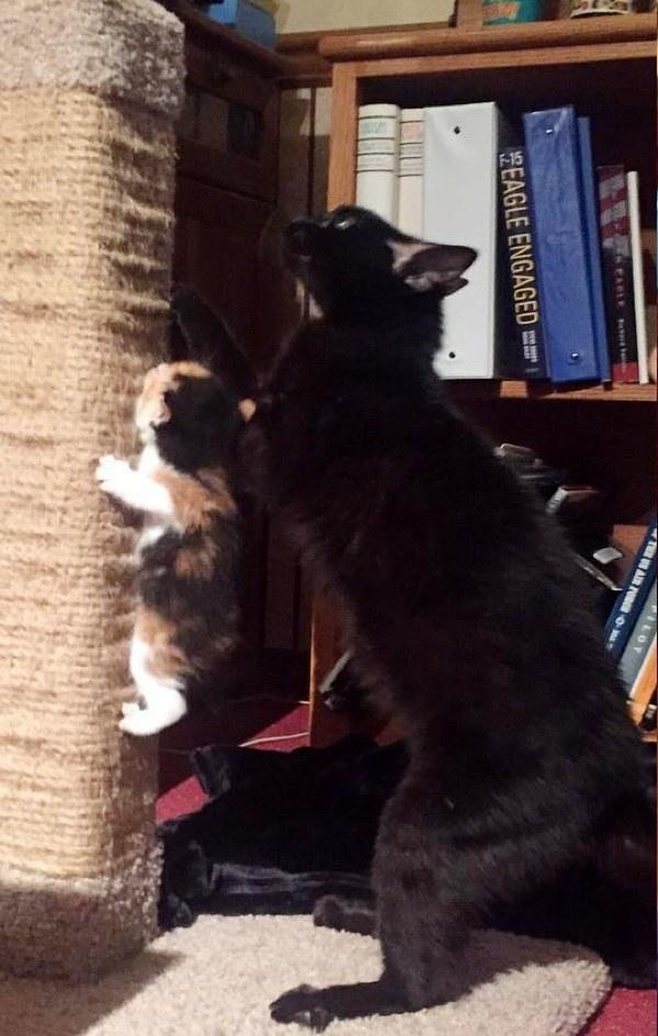 子守する母猫