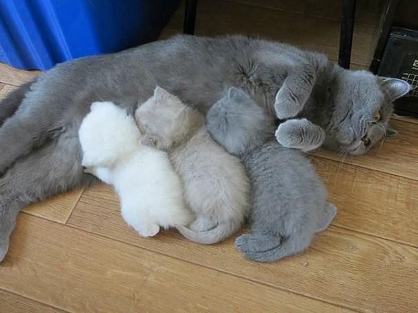 大変そうな母猫