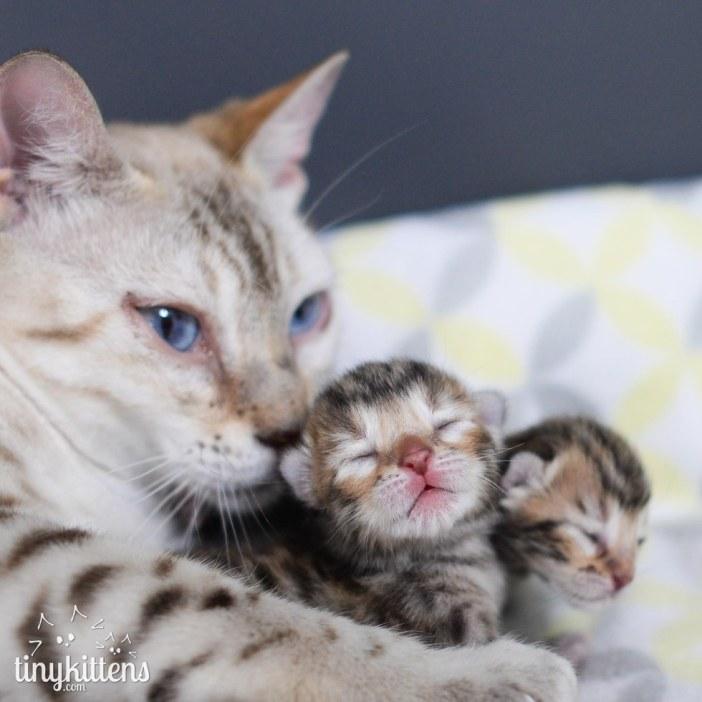 子猫を見守る猫