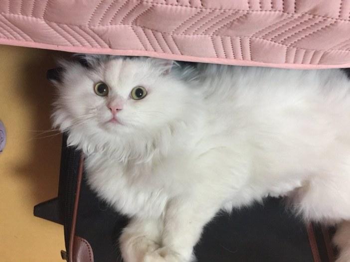 いい顔している猫