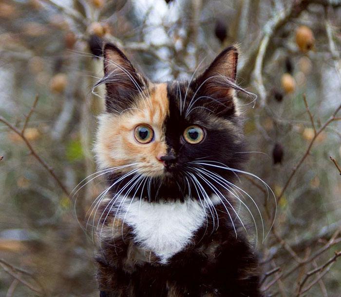 まっすぐ見る子猫