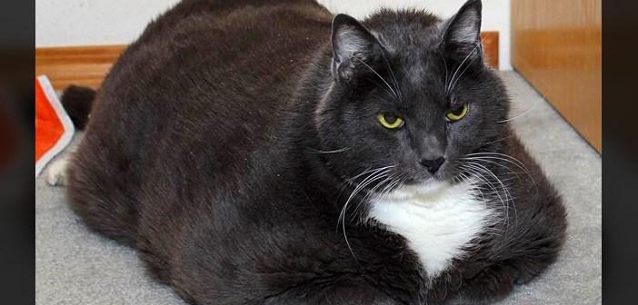 太りすぎて保護施設に連れてこられた猫。1年かけて5kgの減量に成功すると、身も心も別猫へと生まれ変わる! (10枚)