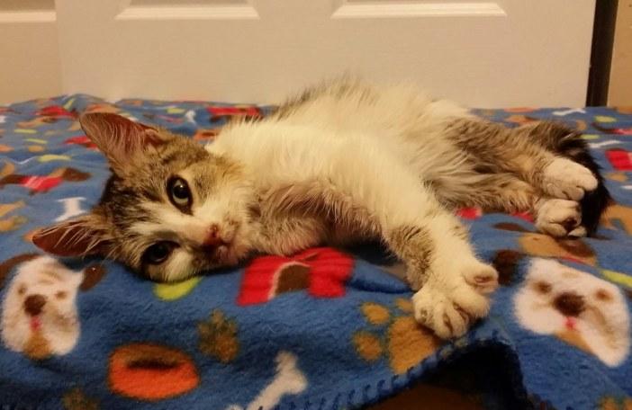 ふみふみ猫
