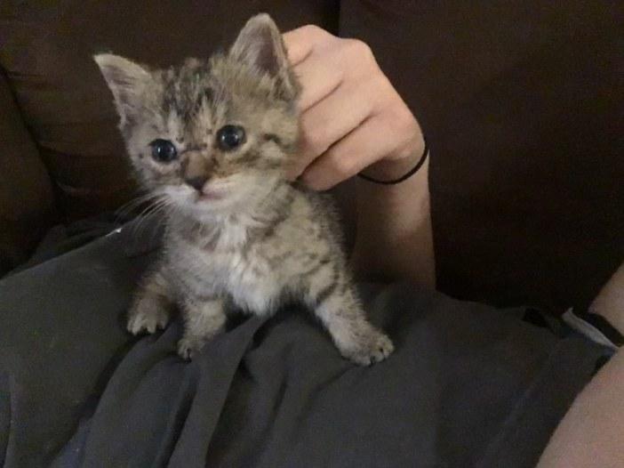 ナデナデされる子猫