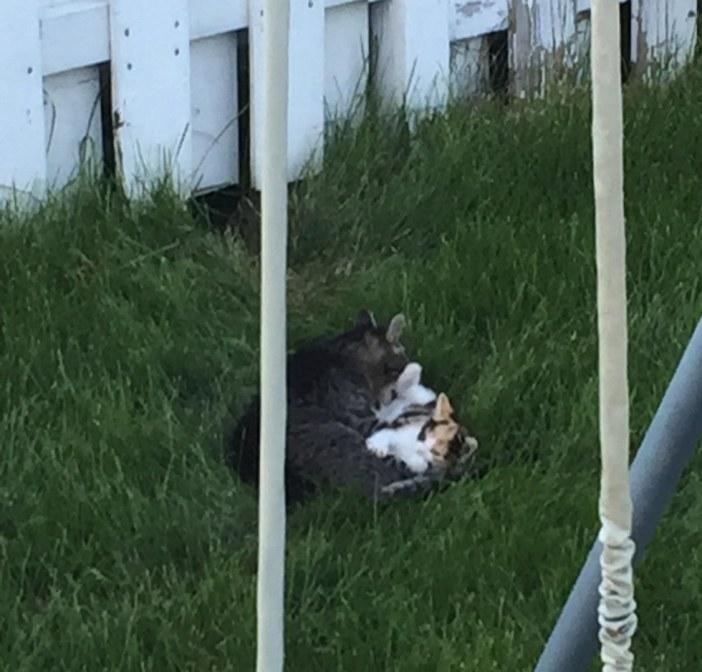 家を訪ねて来た野良猫
