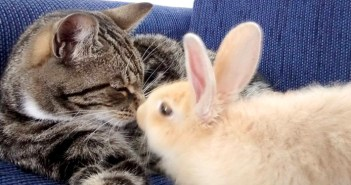 猫とウサギ