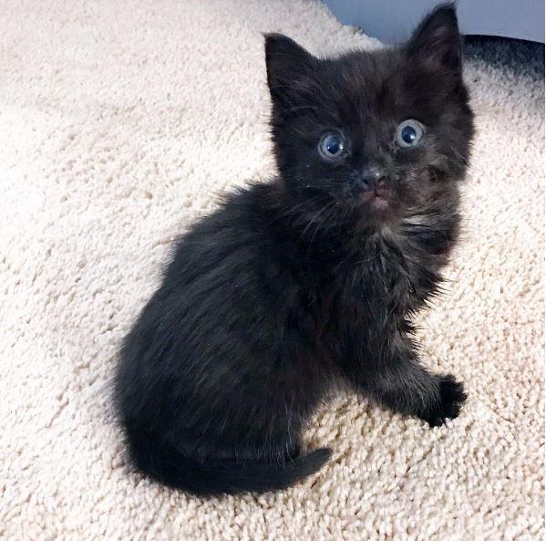 振り向く子猫