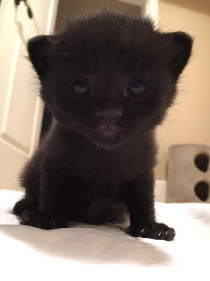 可愛い黒猫