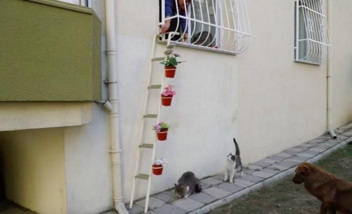 猫用のはしご