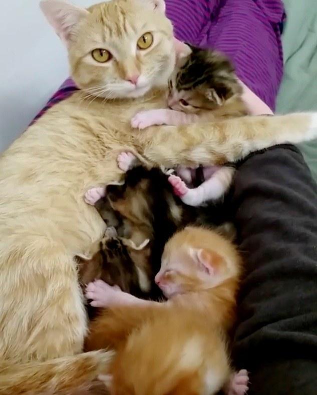 子猫たちを抱く母猫