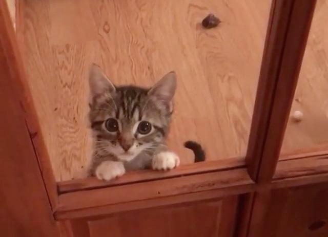 覗いてくる子猫