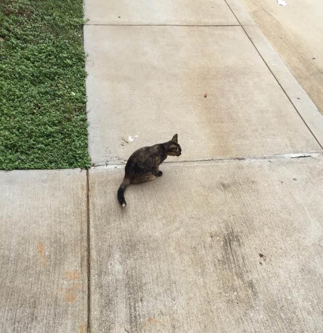 工場前に現れた猫